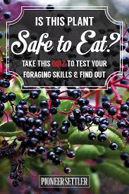 edible native plants australia foraging for edible wild plants quiz would you survive