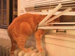 Small Mini Blinds How To Keep Cats From Breaking Blinds The Finishing Touch