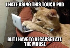 Cat Problems Meme - cat problems meme guy
