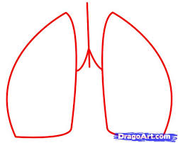 how to draw lungs step by step anatomy people free online