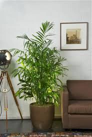Beautiful Indoor Plants Fresh Beautiful Indoor Plant Ideas For Eco Friendly 23201