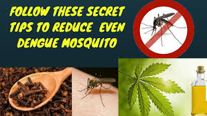 Mosquito Repellent For Home by Amazing Tips To Get Rid Of Dengue Mosquitoes Natural Mosquito
