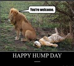 Hump Day Meme - happy hump day meme images humor and funny pics