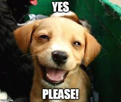 Yes Please Meme - image tagged in happy dog imgflip