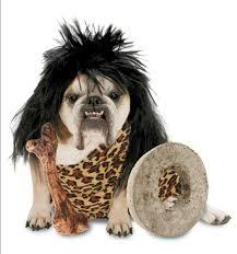 Boy Dog Halloween Costumes 15 Dog Costume Images Dog Halloween Costumes
