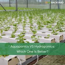 aquaponics vs hydroponics which one is better nov 2017