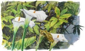 Calla Lillies Gurney Journey Painting Calla Lilies