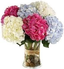 hydrangea bouquet mixed hydrangea bouquet in bethesda md ariel bethesda florist
