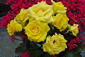 flower grandma yellow rose flowers beautiful roses nature red