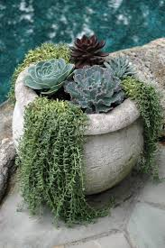 Low Light Succulents by 203 Best Succulent Pot Ideas Images On Pinterest Succulents