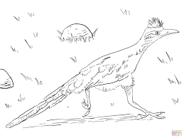greater roadrunner coloring page free printable coloring pages