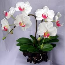white orchids 2014 sj af039 hot sale artificial white orchid for indoor