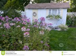 Flowering Shrubs New England - a new england coastal cottage and lavender purple cleome flower