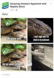Reptilian Meme - i pooted derp giraffe toomanycats s profile reptiles caps