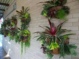 best 25 outdoor wall planters ideas on pinterest succulent wall