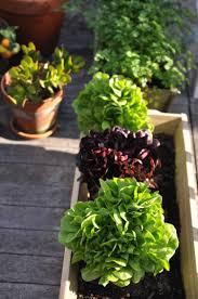 hochbeet balkon hochbeet balkon selber bauen bepflanzen salate gemuese