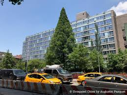 which side does st go on there s a redwood tree on houston street in nyc untapped cities