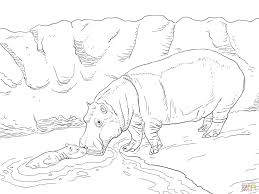 hippopotamus for coloring page animal free prints hippopotamus