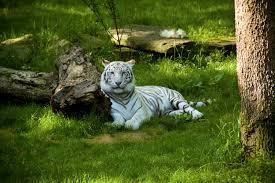 nashville zoo at grassmere nashville tn 37211 yp com
