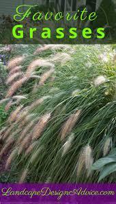 ornament ornamental grasses stunning ornamental grasses houston