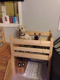 Dog Bunk Beds Furniture by Gallery Dog Bunk Beds