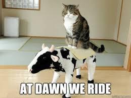 Random Cat Meme - cat afternoon randomness 28 photos cat treats cat and animal