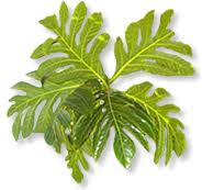Tropical Plants Images - tropical plant and soil sciences