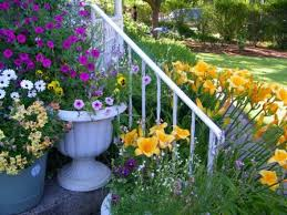 20 best florida landscaping images on pinterest garden ideas
