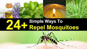 Mosquito Repellent For Home by 24 Simple Ways To Repel Mosquitoes