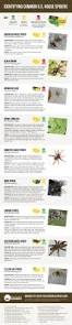 harmless or deadly how to identify common house spiders visual ly