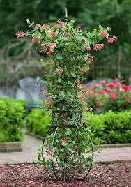 14 best flowers images on pinterest garden trellis gardening