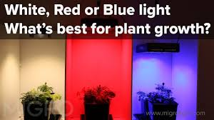 how well would a plant grow under pure yellow light the effect of red blue and white light on plant growth setup of