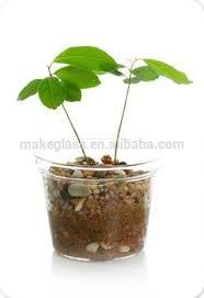 glass flower pot glass plant pot garden pots buy glass flower