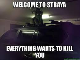 Straya Memes - welcome to straya everything wants to kill you creepy koala