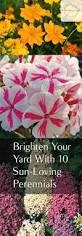 10 Best Perennials And Flowers by Best 25 Perennial Gardens Ideas On Pinterest Flower Garden