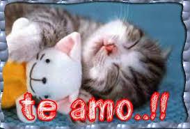 imagenes de gatitos sin frases frases de amor otro sitio más de rediles