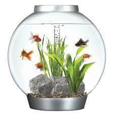 all types of fish aquarium u0026 dog foods at rs 150 fish aquarium