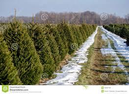 christmas tree farm business plan christmas lights decoration