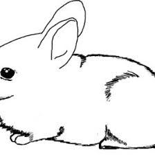 baby rabbit coloring kids drawing coloring pages marisa