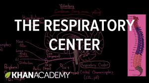 the respiratory center respiratory system physiology nclex rn
