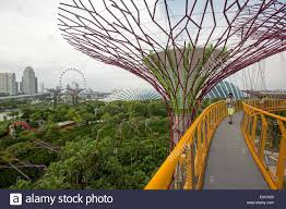on skyway walk through tops of artificial trees vast