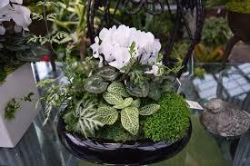 low light plants for bedroom houseplants blackberry burrow