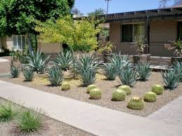 desert landscaping ideas u2013 basic rules to design a great backyard