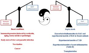 ijms free full text melatonin buffering the immune system html