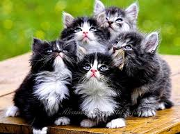 beautiful kittens 34 best cats images on pinterest ha ha cat stuff and baby