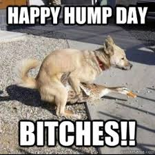 Hump Day Memes - happy hump day meme images and pics