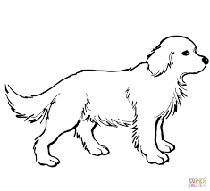 golden retriever coloring pages eson me
