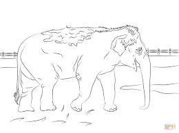 cute indian elephant coloring page free printable coloring pages