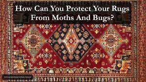 Do Rug Moths Bugs And Rugs What You Need To Know U2013 Rug