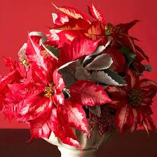 using poinsettias as cut flowers